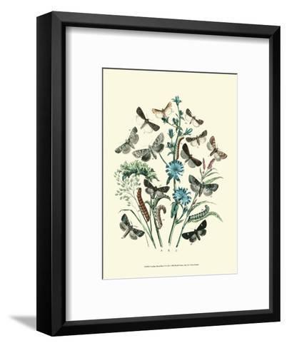 Garden Butterflies II--Framed Art Print