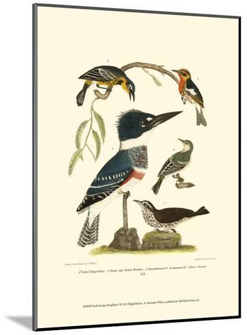 Small Antique Kingfisher I-Alexander Wilson-Mounted Art Print