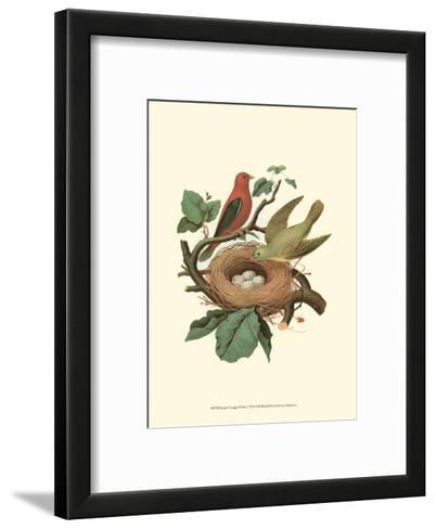 Scarlet Tanager & Nest--Framed Art Print