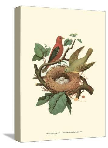 Scarlet Tanager & Nest--Stretched Canvas Print