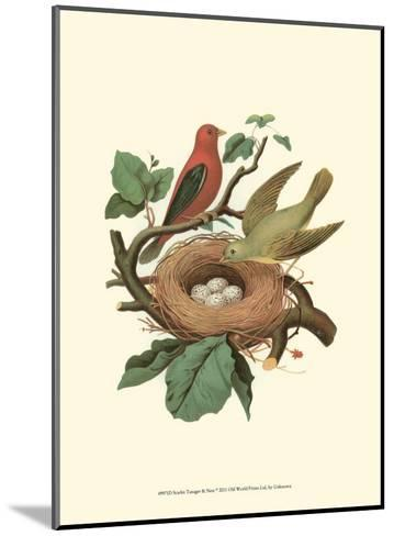 Scarlet Tanager & Nest--Mounted Art Print