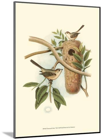 Titmouse & Nest--Mounted Art Print
