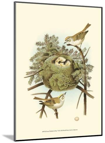 Prairie Warbler & Nest--Mounted Art Print