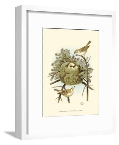 Prairie Warbler & Nest--Framed Art Print