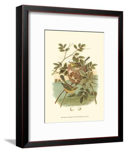 Golden Crowned Kinglet & Nest--Framed Art Print
