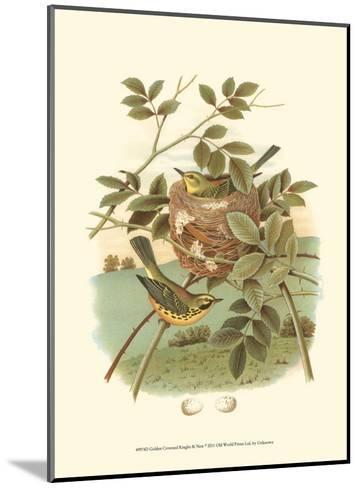 Golden Crowned Kinglet & Nest--Mounted Art Print