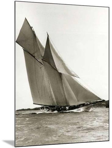 Cetonia-Frank Beken-Mounted Art Print