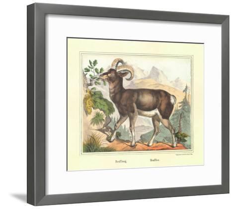 Moufflon-Joachim Scholz-Framed Art Print