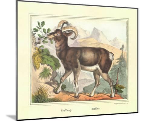 Moufflon-Joachim Scholz-Mounted Art Print