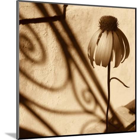 Sepia Flower-Jean-Fran?ois Dupuis-Mounted Art Print
