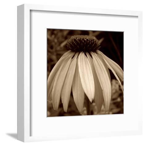 Sepia Flower-Jean-Fran?ois Dupuis-Framed Art Print