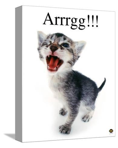 Arrrgg!-Yoneo Morita-Stretched Canvas Print