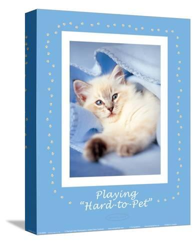 Hard-to-Pet-Rachael Hale-Stretched Canvas Print