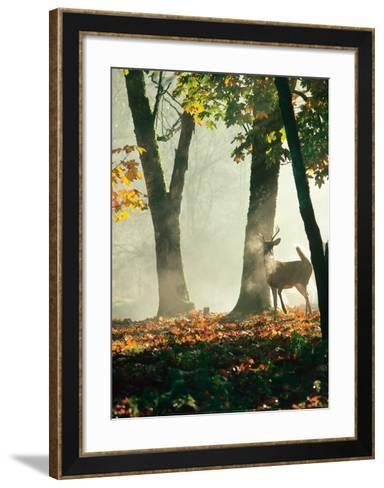 Cerf dans la For?t-Victoria Hurst-Framed Art Print