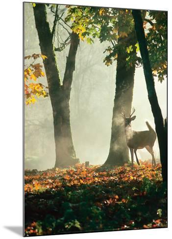 Cerf dans la For?t-Victoria Hurst-Mounted Art Print
