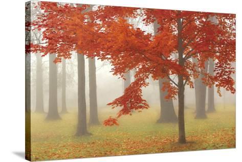 Autumn Mist II-Donna Geissler-Stretched Canvas Print