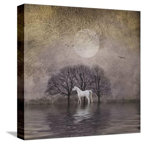 White Horse in Pond-Dawne Polis-Stretched Canvas Print