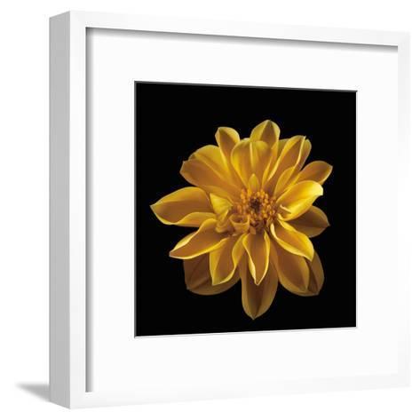 Four Keeps III-Assaf Frank-Framed Art Print