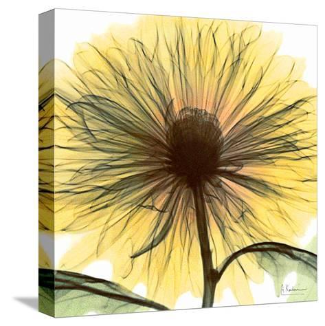 Dream in Yellow-Albert Koetsier-Stretched Canvas Print