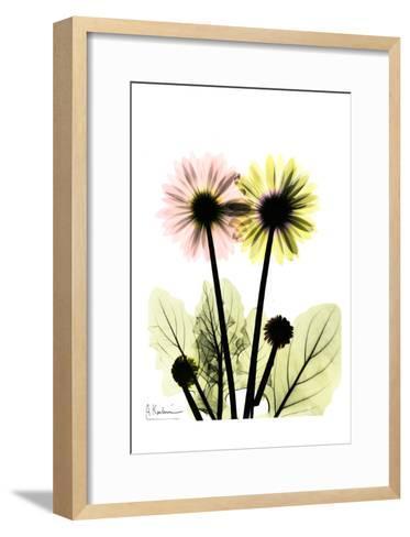 Gerbera in Color-Albert Koetsier-Framed Art Print