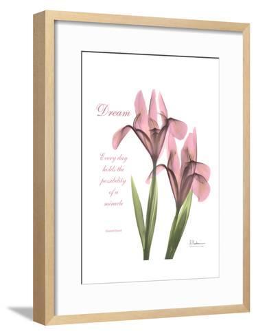 Pink Iris, Dream-Albert Koetsier-Framed Art Print