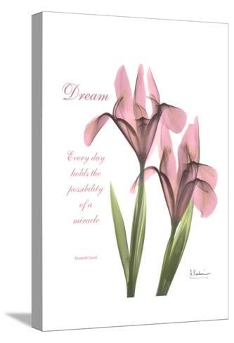 Pink Iris, Dream-Albert Koetsier-Stretched Canvas Print
