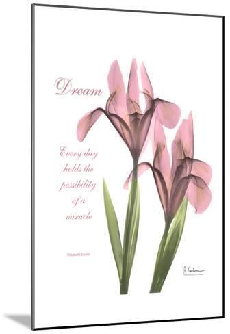 Pink Iris, Dream-Albert Koetsier-Mounted Art Print