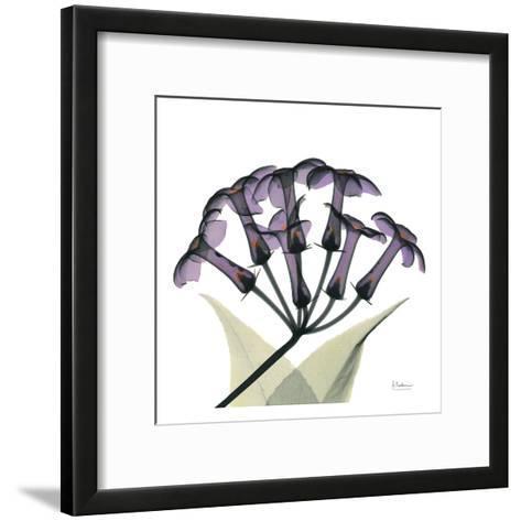 Purple Stephanotis Close Up-Albert Koetsier-Framed Art Print
