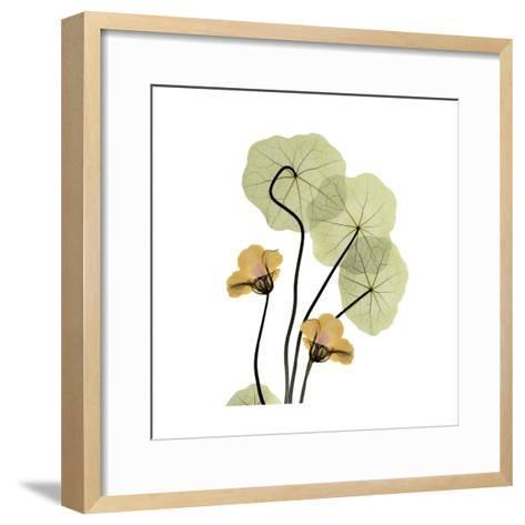 Nasturtium Bouquet-Albert Koetsier-Framed Art Print
