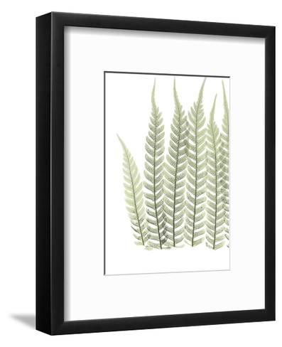 Tree Fern in Green-Albert Koetsier-Framed Art Print