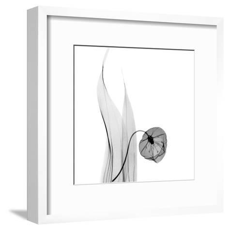 Sandersonia in Black and White-Albert Koetsier-Framed Art Print