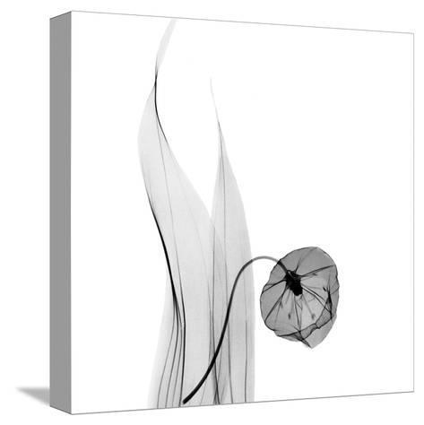 Sandersonia in Black and White-Albert Koetsier-Stretched Canvas Print