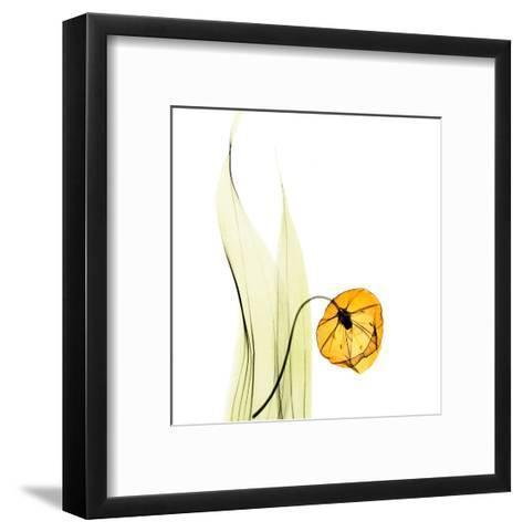 Sandersonia in Gold-Albert Koetsier-Framed Art Print