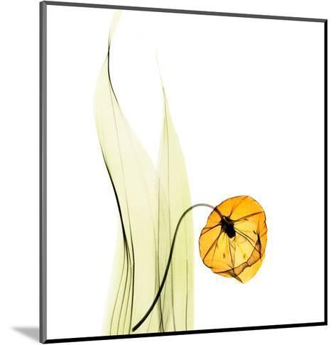 Sandersonia in Gold-Albert Koetsier-Mounted Art Print