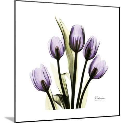 Tulip in Purple-Albert Koetsier-Mounted Art Print