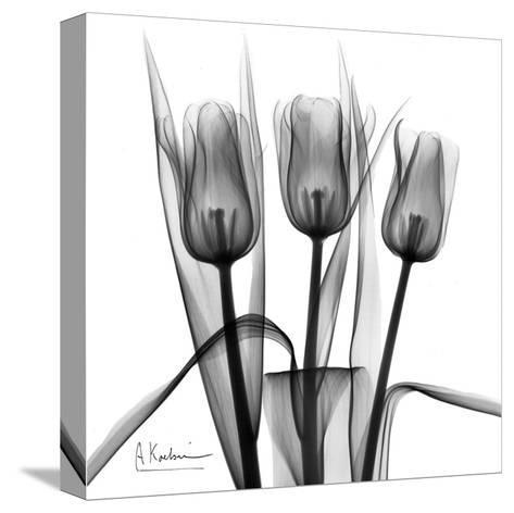 Tulip Trio in Black and White-Albert Koetsier-Stretched Canvas Print