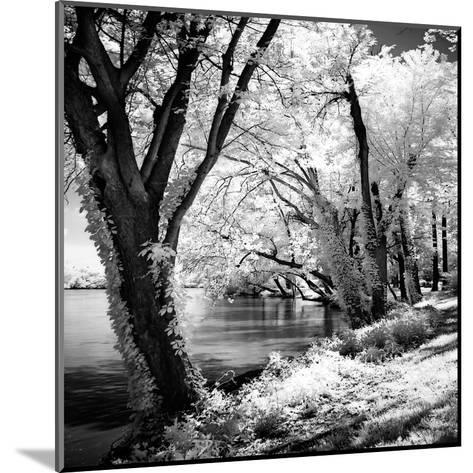 Spring on the River Square II-Alan Hausenflock-Mounted Art Print