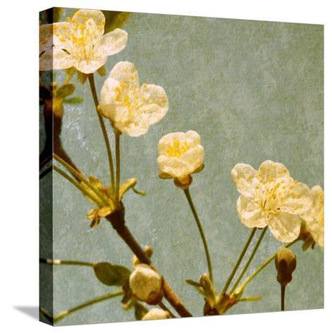Blossoming Branch--Stretched Canvas Print