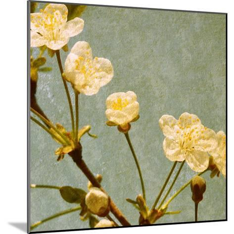 Blossoming Branch--Mounted Art Print