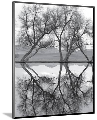 Clarity in the Waters--Mounted Art Print
