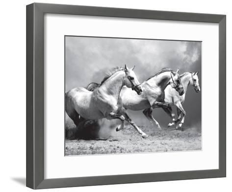 White Stallions II--Framed Art Print