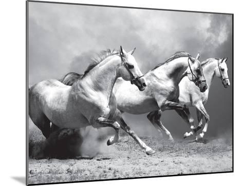White Stallions II--Mounted Art Print