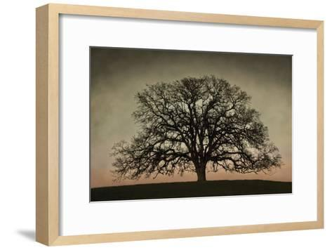 Majestic Oak-David Winston-Framed Art Print