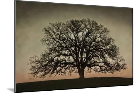 Majestic Oak-David Winston-Mounted Art Print