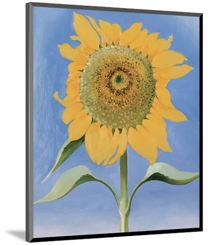 Sunflower, New Mexico, c.1935 Art Print by Georgia O ...