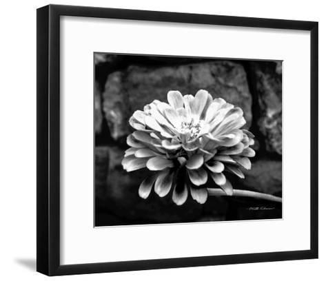Zinnia-Harold Silverman-Framed Art Print