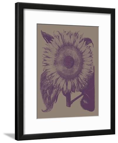 Sunflower, no. 14--Framed Art Print