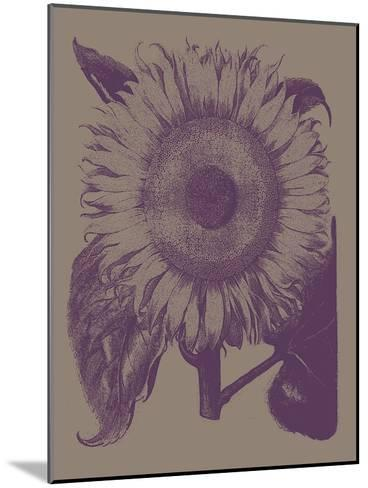 Sunflower, no. 14--Mounted Art Print