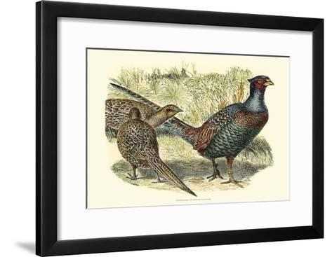 Pheasant Varieties I--Framed Art Print