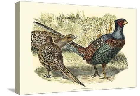 Pheasant Varieties I--Stretched Canvas Print